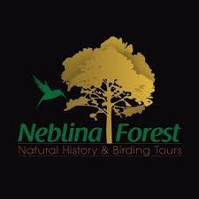 neblina_forest.jpg