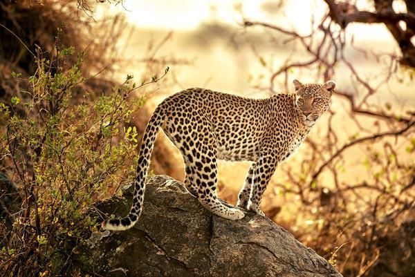 Tansania: Das Land der Savannen - Ines Anderl / Abendsonne Afrika - Photo+Adventure