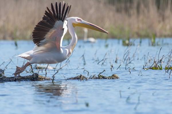 Donaudelta: Unterwegs im Natur- und Vogelparadies - Tibi Tioc & Bernhard Brenner - Photo+Adventure