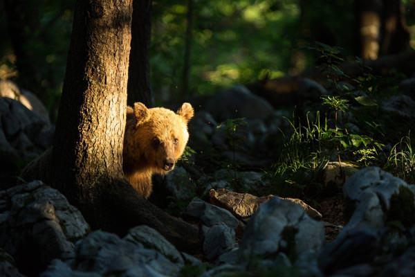 Unter wilden Bären - Christine Sonvilla / Slowenien - Photo+Adventure