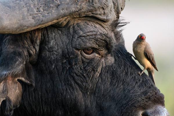 Botswana: Auf Fotosafari im Okavango-Delta - Sandra Petrowitz / Diamir Erlebnisreisen - Photo+Adventure