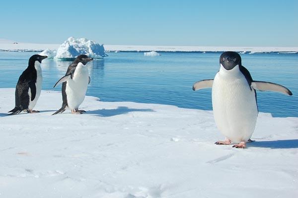 Über die Falklandinseln und Südgeorgien in die Antarktis - Philipp Schaudy / Ikarus Tours - Photo+Adventure