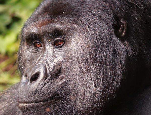 Uganda: die Perle Afrikas - Timo Knöfel / Meine Welt Reisen - Photo+Adventure
