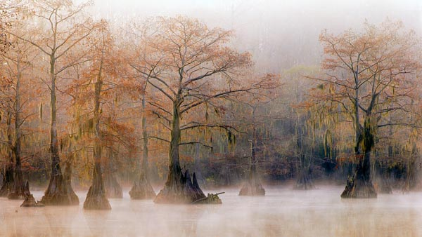 Louisianas Zypressensümpfe: Amerikas vergessener Dschungel - Verena & Georg Popp-Hackner / Popp Hackner Photography - Photo+Adventure